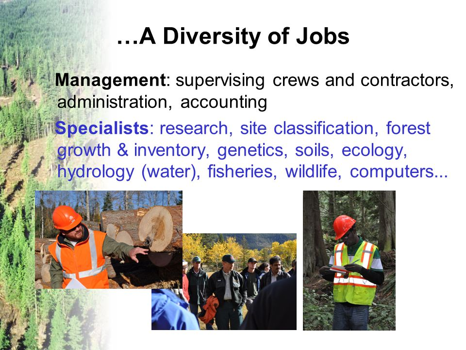 …A Diversity of Jobs Management: supervising crews and contractors, administration, accounting Specialists: research, site classification, forest grow