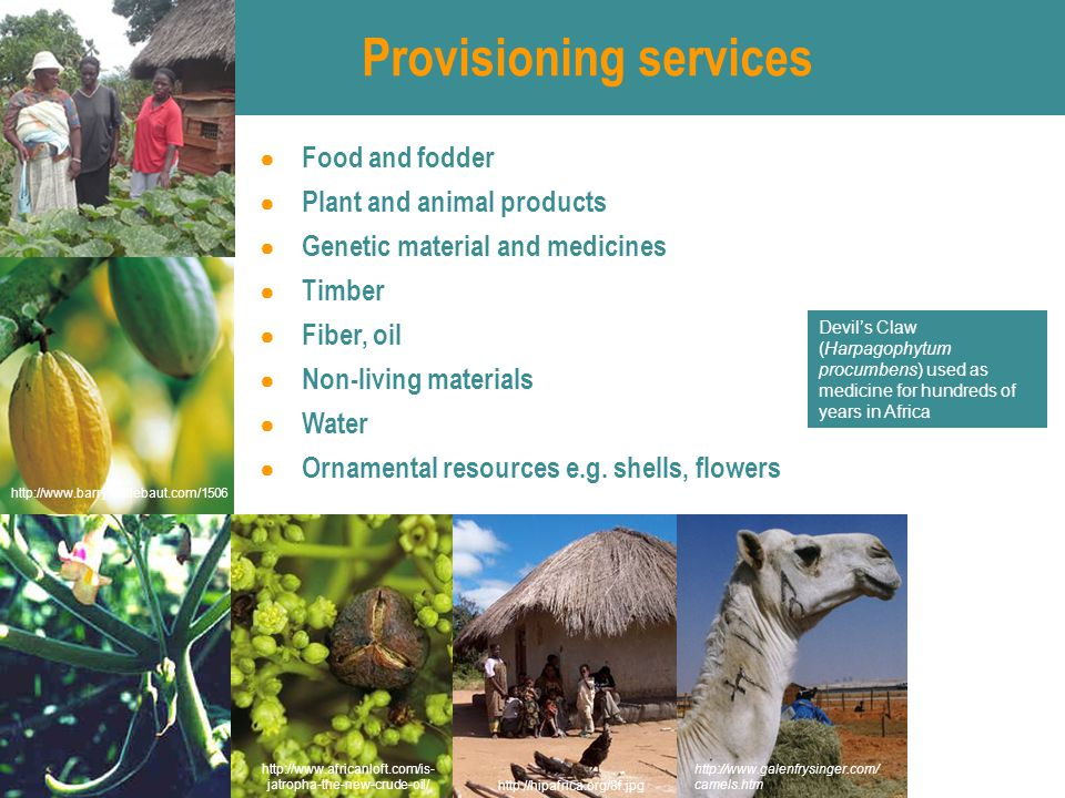 Provisioning services ● Food and fodder ● Plant and animal products ● Genetic material and medicines ● Timber ● Fiber, oil ● Non-living materials ● Water ● Ornamental resources e.g.