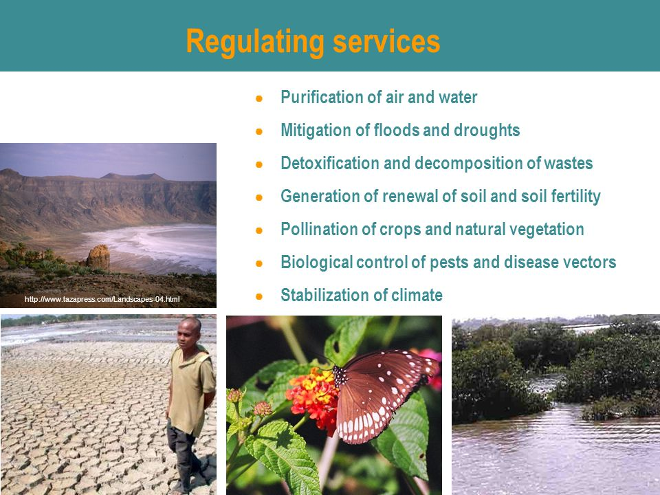 Regulating services ● Purification of air and water ● Mitigation of floods and droughts ● Detoxification and decomposition of wastes ● Generation of renewal of soil and soil fertility ● Pollination of crops and natural vegetation ● Biological control of pests and disease vectors ● Stabilization of climate http://www.tazapress.com/Landscapes-04.html