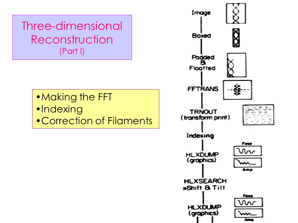 Three-dimensional Reconstruction (MRC) Electron Micrographs 3D Map Correction of Filaments Alignment of Filaments Combining Filaments Indexing in Fourier space