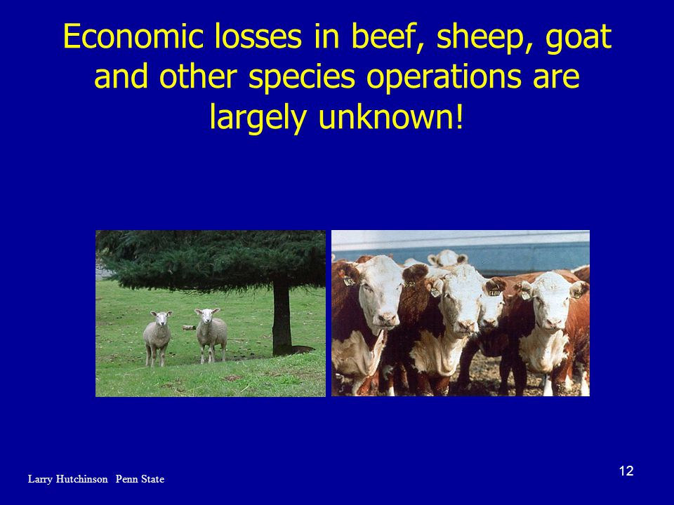 12 Economic losses in beef, sheep, goat and other species operations are largely unknown.