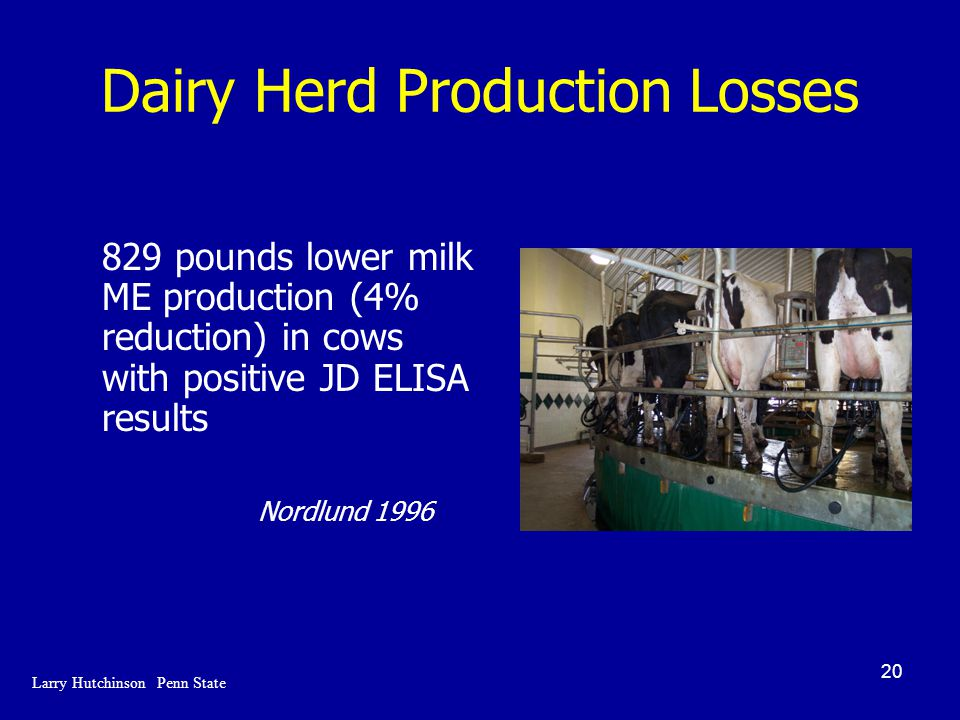 20 Dairy Herd Production Losses 829 pounds lower milk ME production (4% reduction) in cows with positive JD ELISA results Nordlund 1996 Larry Hutchinson Penn State
