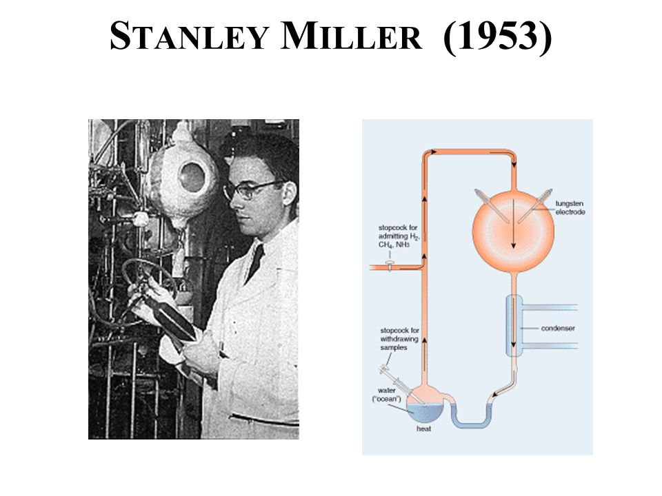 S TANLEY M ILLER (1953)