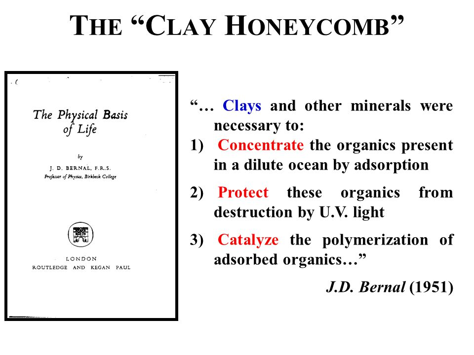 "T HE ""C LAY H ONEYCOMB "" ""… Clays and other minerals were necessary to: 1) Concentrate the organics present in a dilute ocean by adsorption 2) Protect"