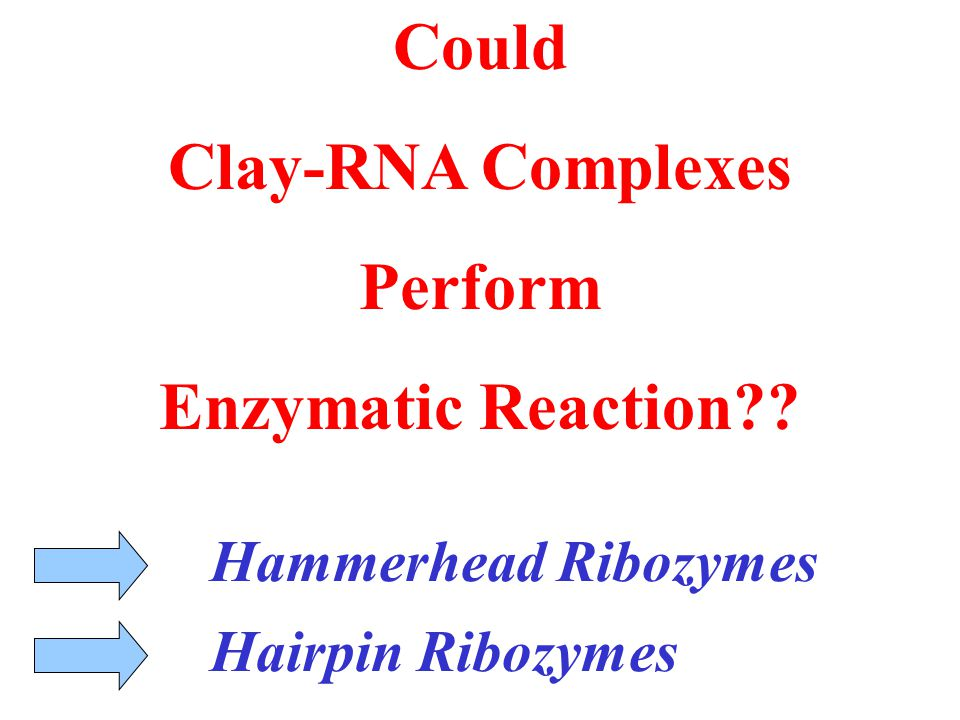 Hammerhead Ribozymes Hairpin Ribozymes Could Clay-RNA Complexes Perform Enzymatic Reaction