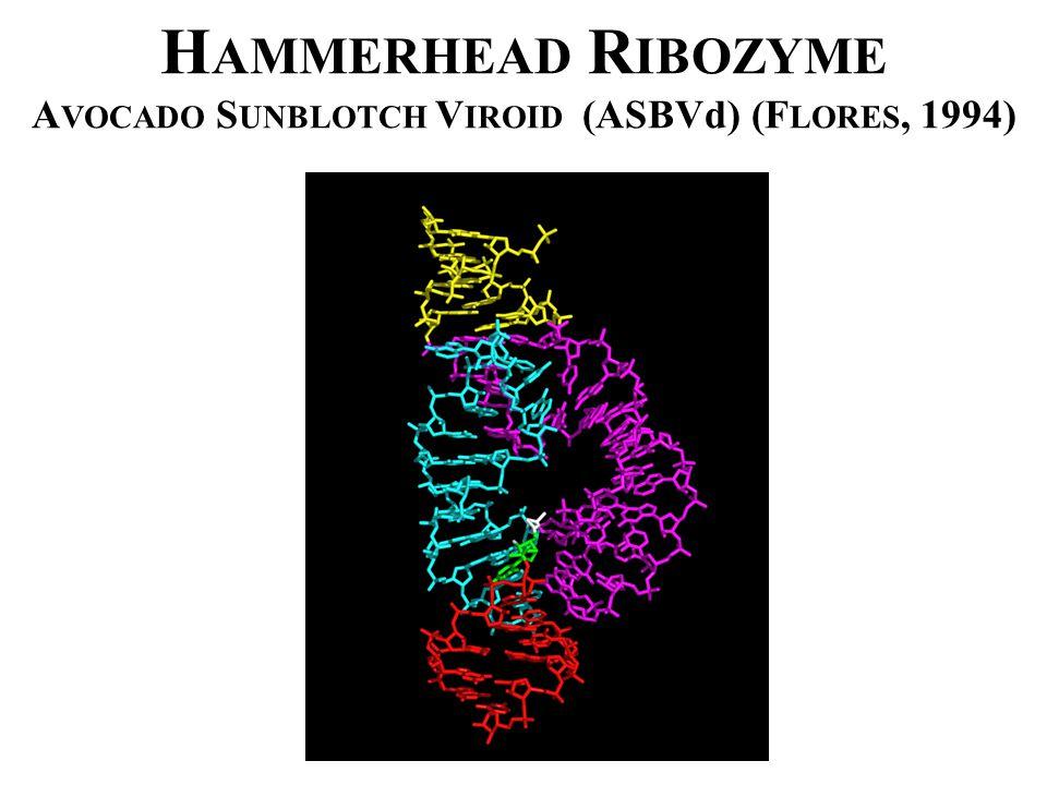 H AMMERHEAD R IBOZYME A VOCADO S UNBLOTCH V IROID (ASBVd) (F LORES, 1994)