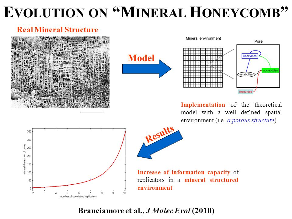 Real Mineral Structure Implementation of the theoretical model with a well defined spatial environment (i.e.