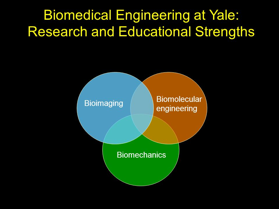 Biomedical Engineering at Yale: Research and Educational Strengths Biomechanics Biomolecular engineering Bioimaging