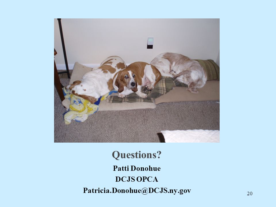 Questions? Patti Donohue DCJS OPCA Patricia.Donohue@DCJS.ny.gov 20