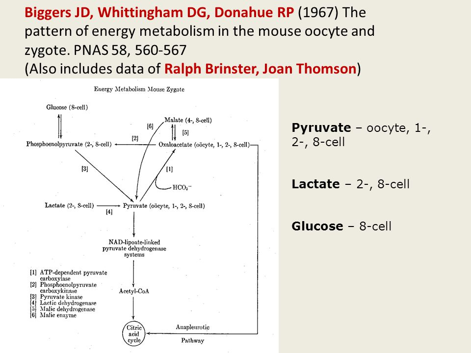 Biggers JD, Whittingham DG, Donahue RP (1967) The pattern of energy metabolism in the mouse oocyte and zygote.