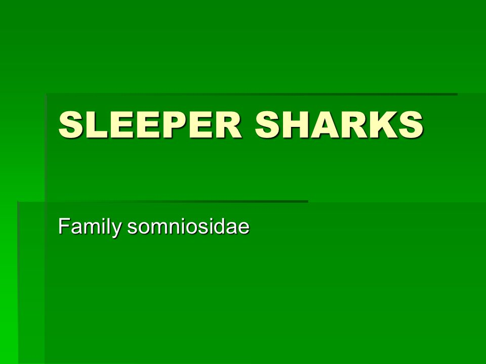 SLEEPER SHARKS Family somniosidae