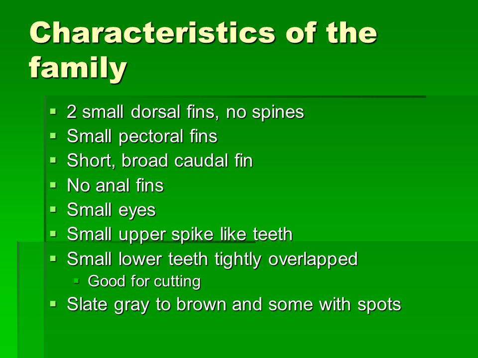 Characteristics of the family  2 small dorsal fins, no spines  Small pectoral fins  Short, broad caudal fin  No anal fins  Small eyes  Small upper spike like teeth  Small lower teeth tightly overlapped  Good for cutting  Slate gray to brown and some with spots