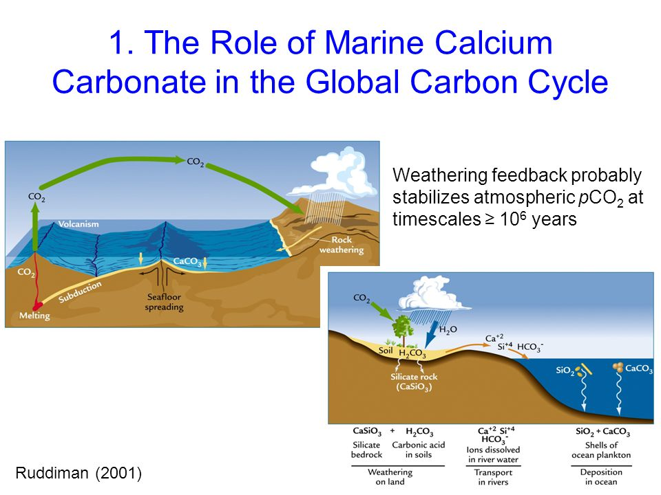 1. The Role of Marine Calcium Carbonate in the Global Carbon Cycle Ruddiman (2001) Weathering feedback probably stabilizes atmospheric pCO 2 at timesc