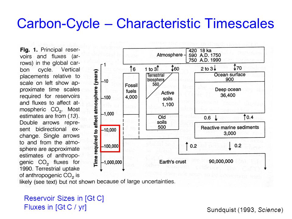 Sundquist (1993, Science) Reservoir Sizes in [Gt C] Fluxes in [Gt C / yr] Carbon-Cycle – Characteristic Timescales