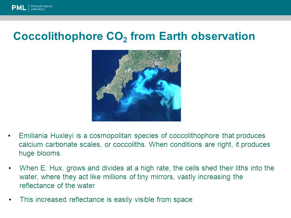 Coccolithophore CO 2 from Earth observation The calcification reaction Ca 2+ + 2HCO 3 -  CaCO 3 + H 2 O + CO 2 increases the concentration of CO 2 in the water and reduces bicarbonate concentration and alkalinity The increase in surface water CO 2 concentration causes flux from atmosphere to ocean to decrease, or that from ocean to atmosphere to increase The overall effect is to decrease the north Atlantic sink of CO 2