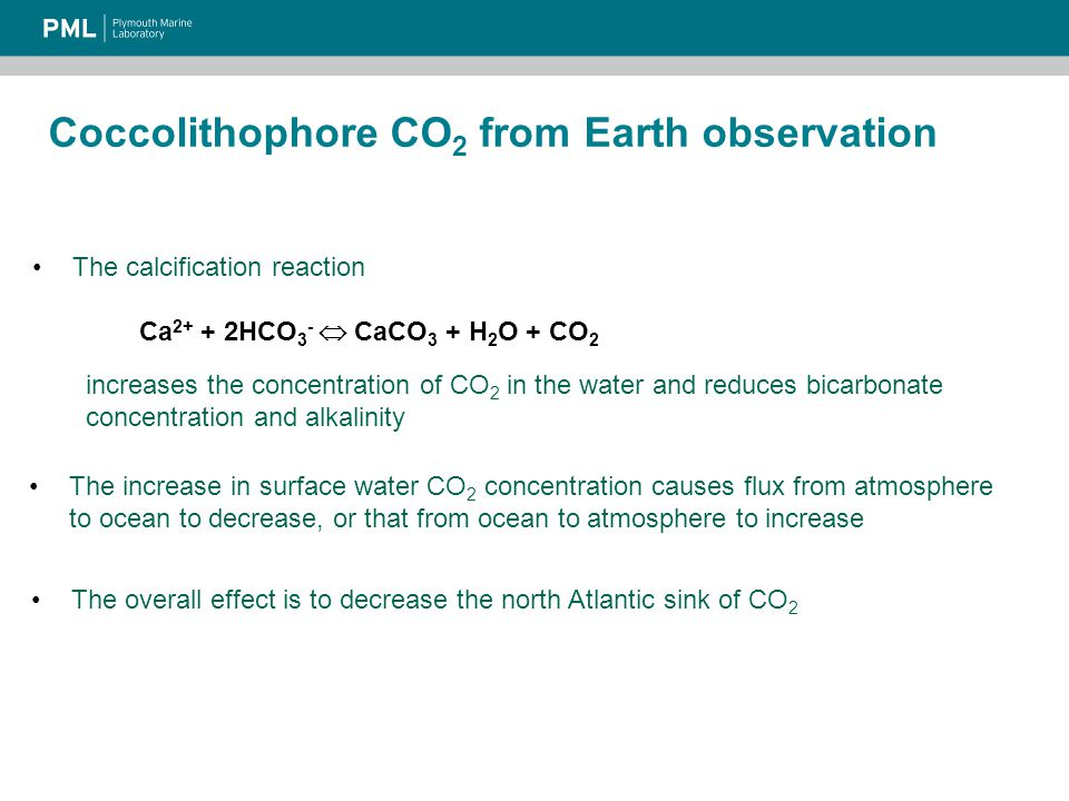 Coccolithophore CO 2 from Earth observation The calcification reaction Ca 2+ + 2HCO 3 -  CaCO 3 + H 2 O + CO 2 increases the concentration of CO 2 in the water and reduces bicarbonate concentration and alkalinity The increase in surface water CO 2 concentration causes flux from atmosphere to ocean to decrease, or that from ocean to atmosphere to increase The overall effect is to decrease the north Atlantic sink of CO 2