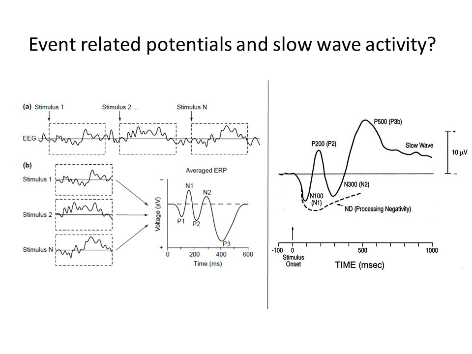 Event related potentials and slow wave activity?