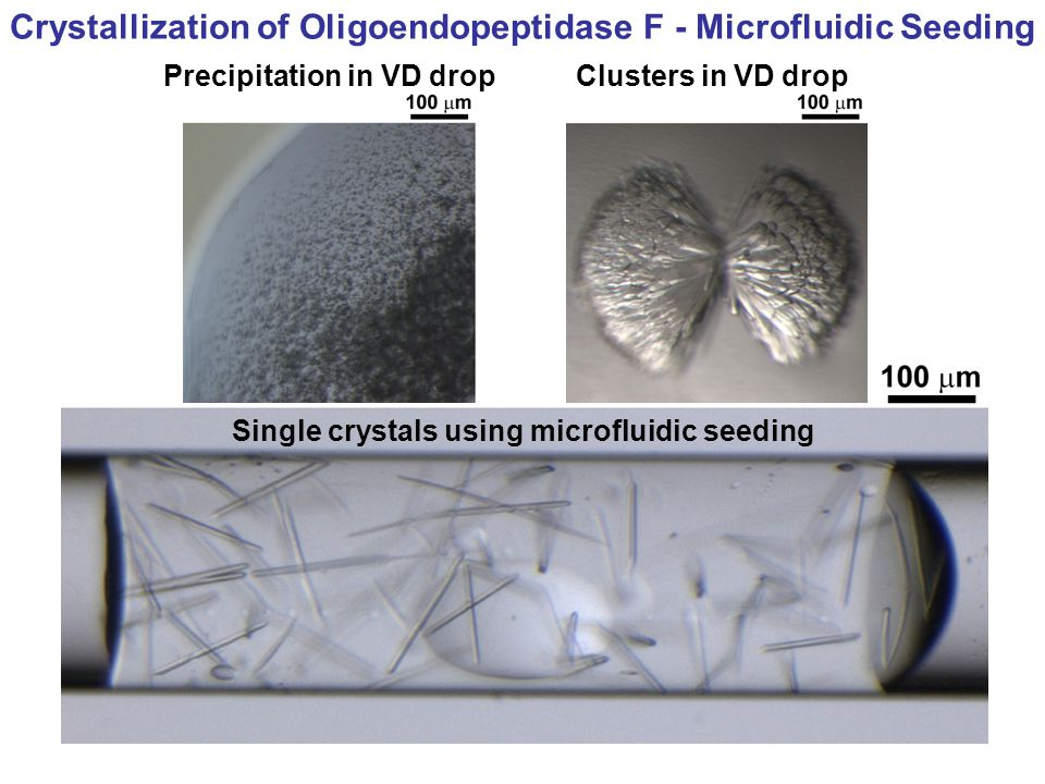 Crystallization of Oligoendopeptidase F - Microfluidic Seeding Single crystals using microfluidic seeding Precipitation in VD dropClusters in VD drop