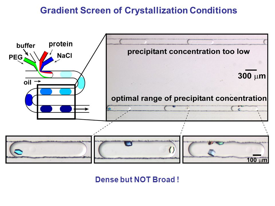 Gradient Screen of Crystallization Conditions protein Dense but NOT Broad !
