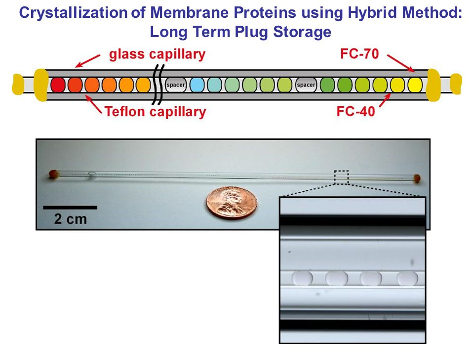 Crystallization of Membrane Proteins using Hybrid Method: Long Term Plug Storage