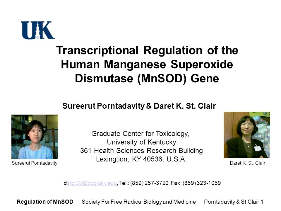 Regulation of MnSOD Society For Free Radical Biology and Medicine Porntadavity & St Clair 1 Transcriptional Regulation of the Human Manganese Superoxide Dismutase (MnSOD) Gene Graduate Center for Toxicology, University of Kentucky 361 Health Sciences Research Building Lexingtion, KY 40536, U.S.A.