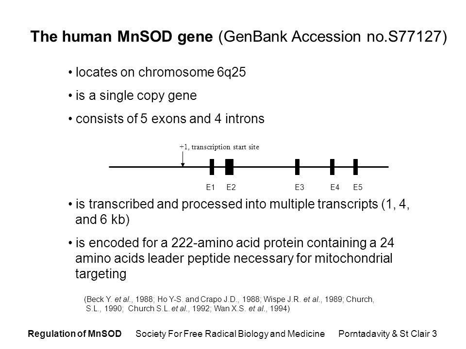 Regulation of MnSOD Society For Free Radical Biology and Medicine Porntadavity & St Clair 14 Deletion analysis.