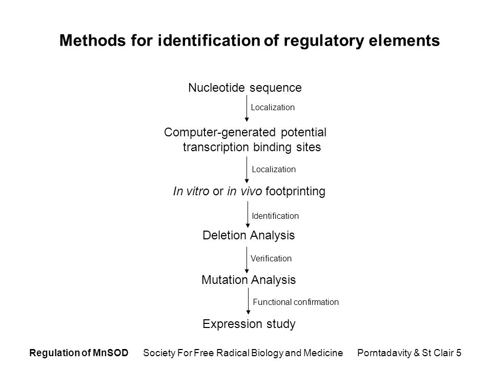 Regulation of MnSOD Society For Free Radical Biology and Medicine Porntadavity & St Clair 5 Methods for identification of regulatory elements Nucleotide sequence Computer-generated potential transcription binding sites In vitro or in vivo footprinting Deletion Analysis Mutation Analysis Expression study Localization Identification Verification Functional confirmation Localization