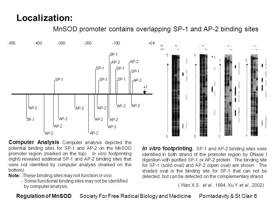 Regulation of MnSOD Society For Free Radical Biology and Medicine Porntadavity & St Clair 7 (Xu Y.