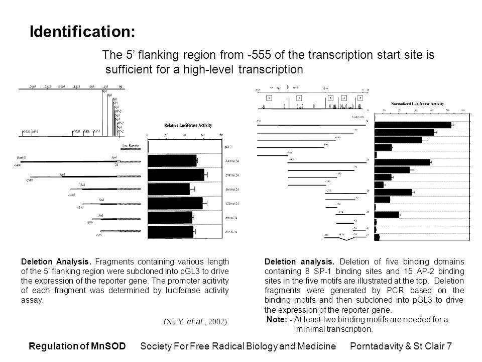 Regulation of MnSOD Society For Free Radical Biology and Medicine Porntadavity & St Clair 18 References - Beck Y., Oren R., Abramovich C., Amit B., Levanon A., Gorecki M., and Hartman R.J.