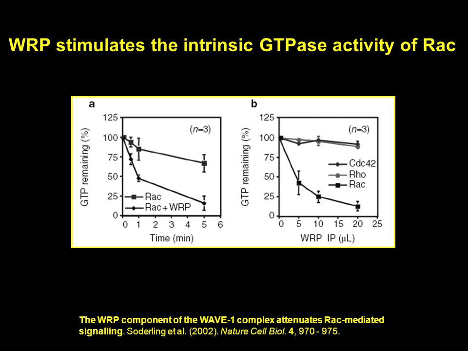 WRP stimulates the intrinsic GTPase activity of Rac The WRP component of the WAVE-1 complex attenuates Rac-mediated signalling.