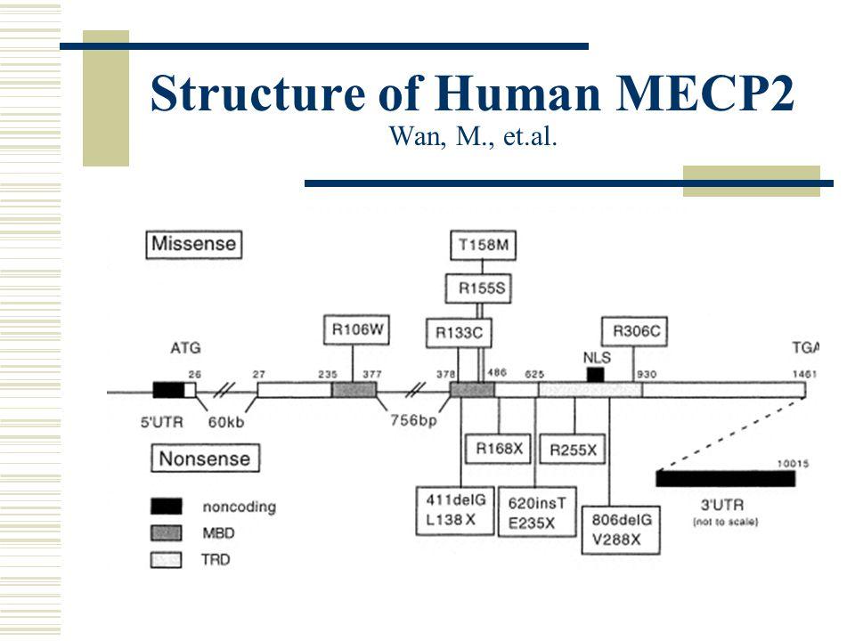 Structure of Human MECP2 Wan, M., et.al.