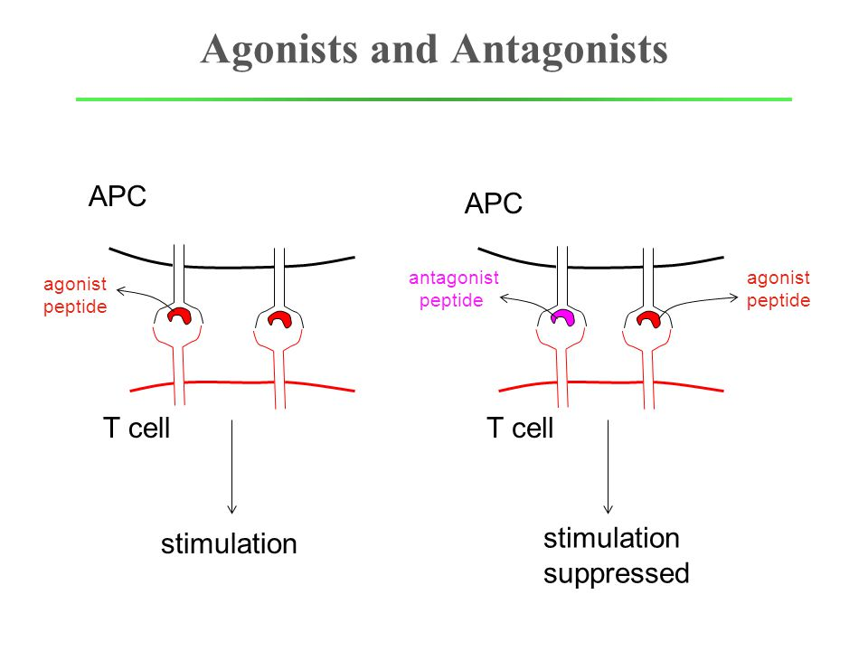 Agonists and Antagonists APC T cell agonist peptide APC T cell antagonist peptide agonist peptide stimulation suppressed