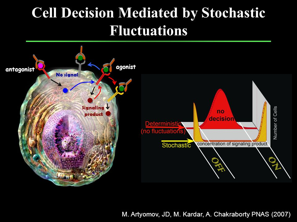 Cell Decision Mediated by Stochastic Fluctuations agonist antagonist Signaling product No signal M.