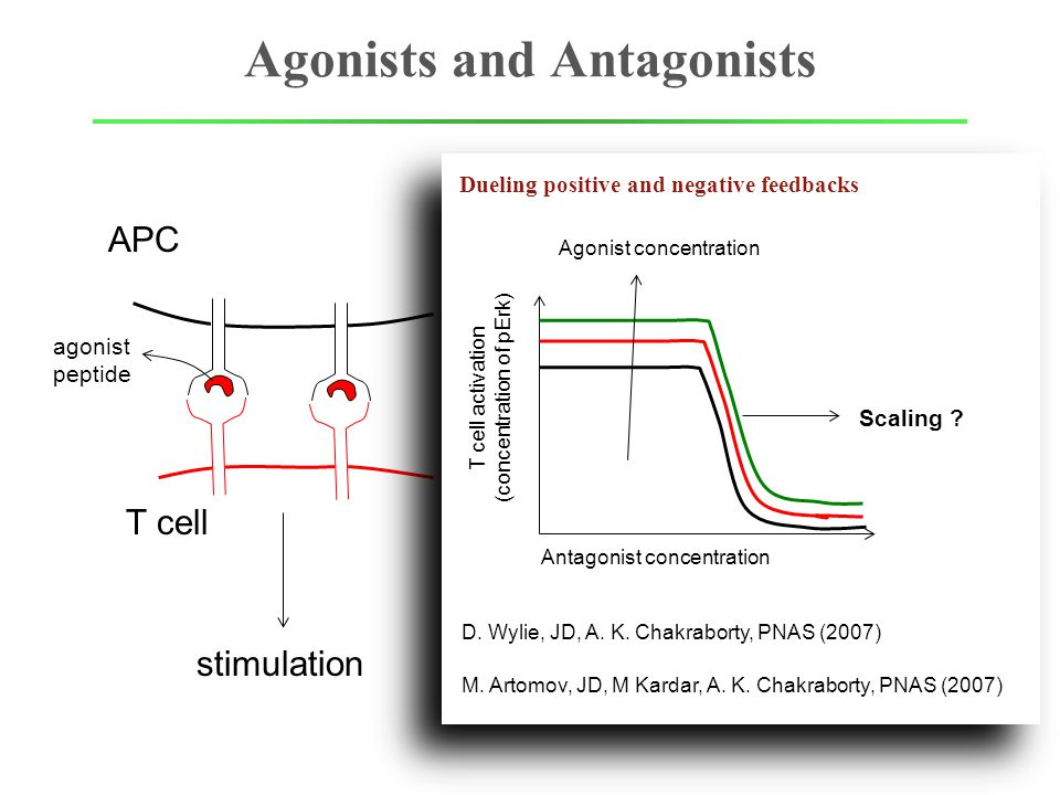 Agonists and Antagonists APC T cell APC agonist peptide stimulation suppressed Dueling positive and negative feedbacks T cell activation (concentration of pErk) Antagonist concentration Scaling .
