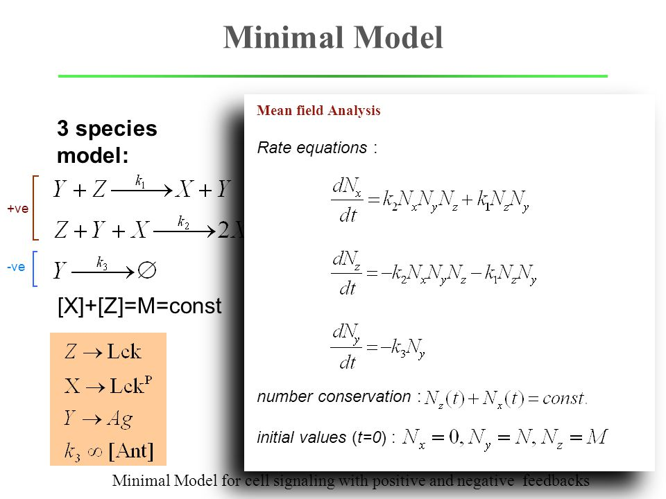 +ve -ve Minimal Model Irreversibility Branching Feedback with distinct time scale 3 species model: Minimal Model for cell signaling with positive and negative feedbacks [X]+[Z]=M=const Mean field Analysis initial values (t=0) : Rate equations : number conservation :