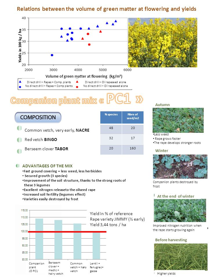 % speciesNbre of seed/m2 4820 3217 20160 Common vetch, very early, NACRE Red vetch BINGO Berseem clover TABOR ADVANTAGES OF THE MIX Fast ground covering = less weed, less herbicides Secured growth (3 species) Improvement of the soil structure, thanks to the strong roots of these 3 legumes Excellent nitrogen releaseto the oilseed rape Increased soil fertility (legumes effect) Varieties easily destroyed by frost Yield in % of reference Rape variety JIMMY (½ early) Yield 3,44 tons / ha Autumn Winter At the end of winter Before harvesting Less weed Rape grows faster The rape develops stronger roots Companion plants destroyed by frost Improved nitrogen nutrition when the rape starts growing again Higher yields Companion plant JD PC1 Berseem clover + medic + hairy vetch Common vetch + hairy vetch Lentil + fenugrec+ gesse Direct drill – Oil rapeseed alone No direct drill – Oil rapeseed alone Direct drill – Rapes + Comp.