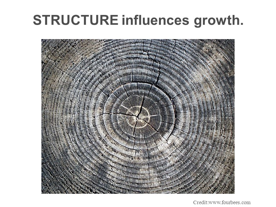 STRUCTURE influences growth. Credit:www.fourbees.com