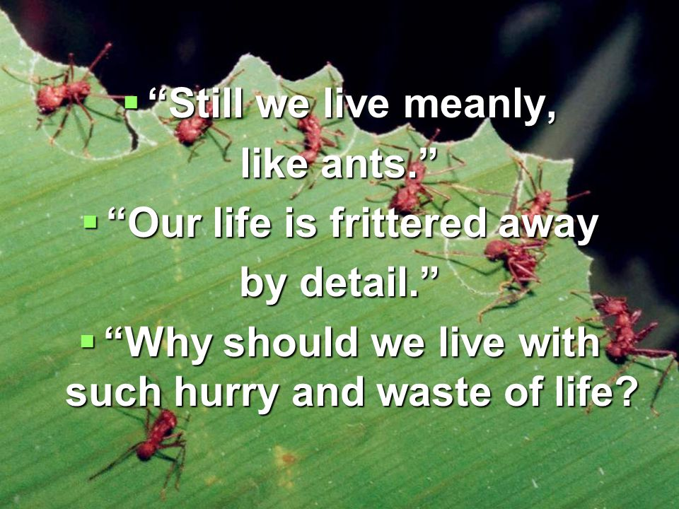  Still we live meanly, like ants.  Our life is frittered away by detail.  Why should we live with such hurry and waste of life
