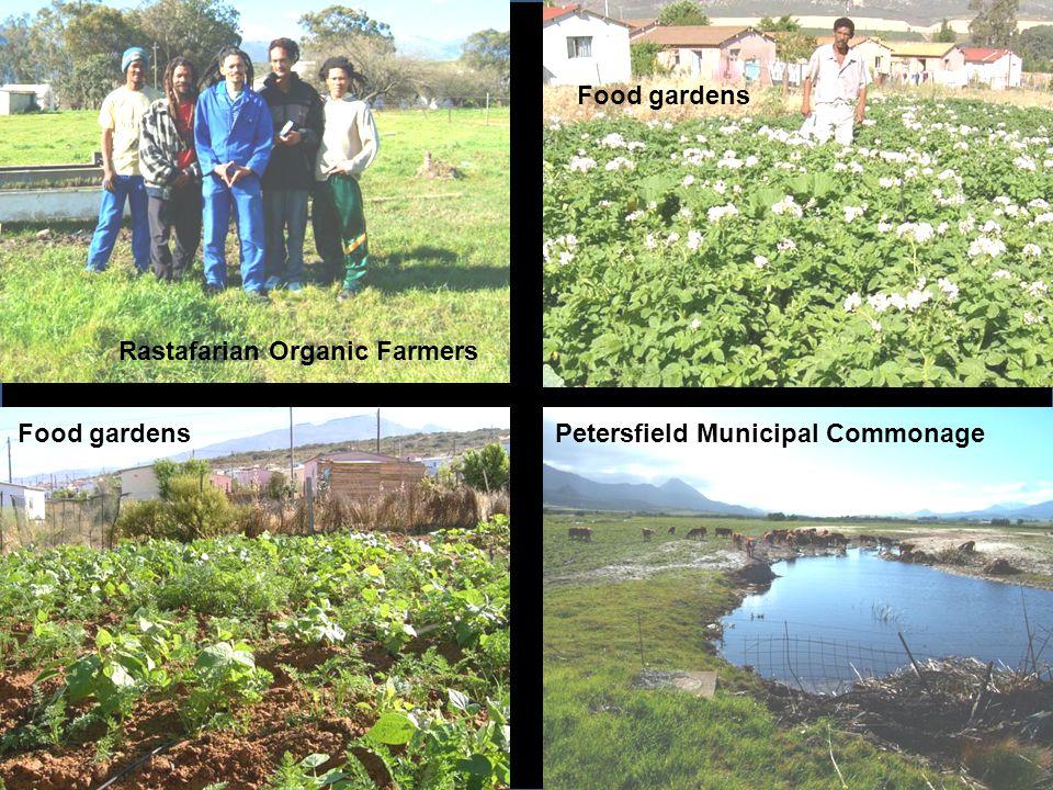 Rastafarian Organic Farmers Petersfield Municipal Commonage Food gardens