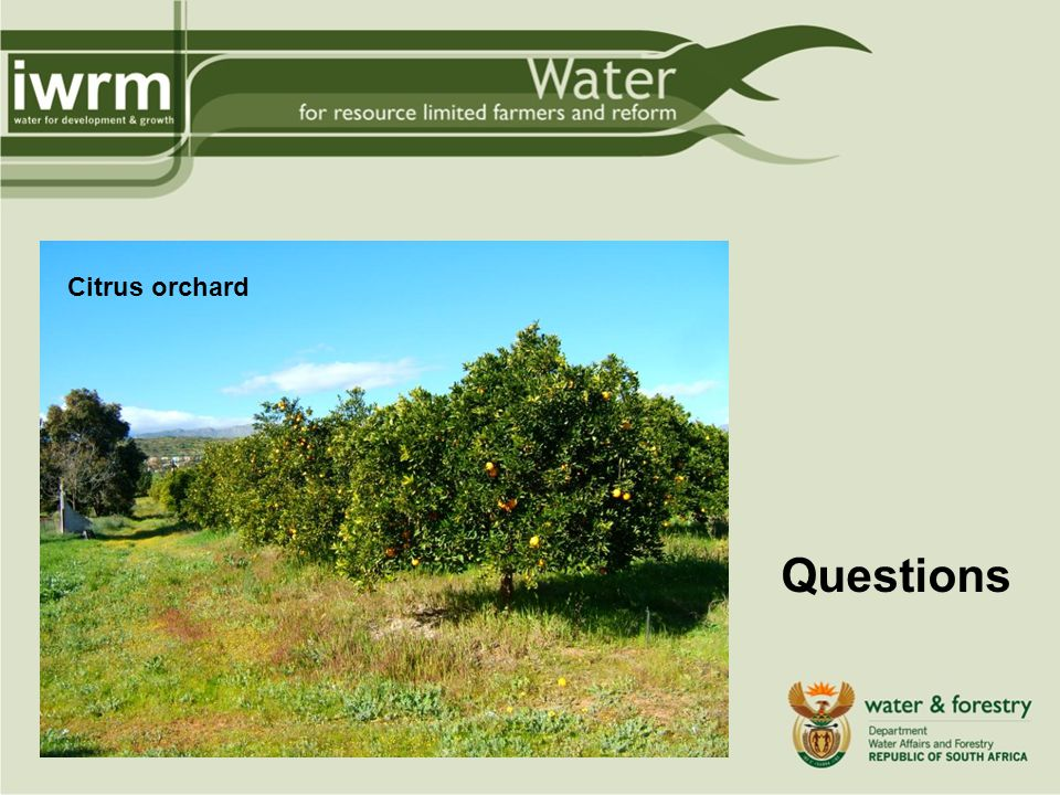 Questions Citrus orchard