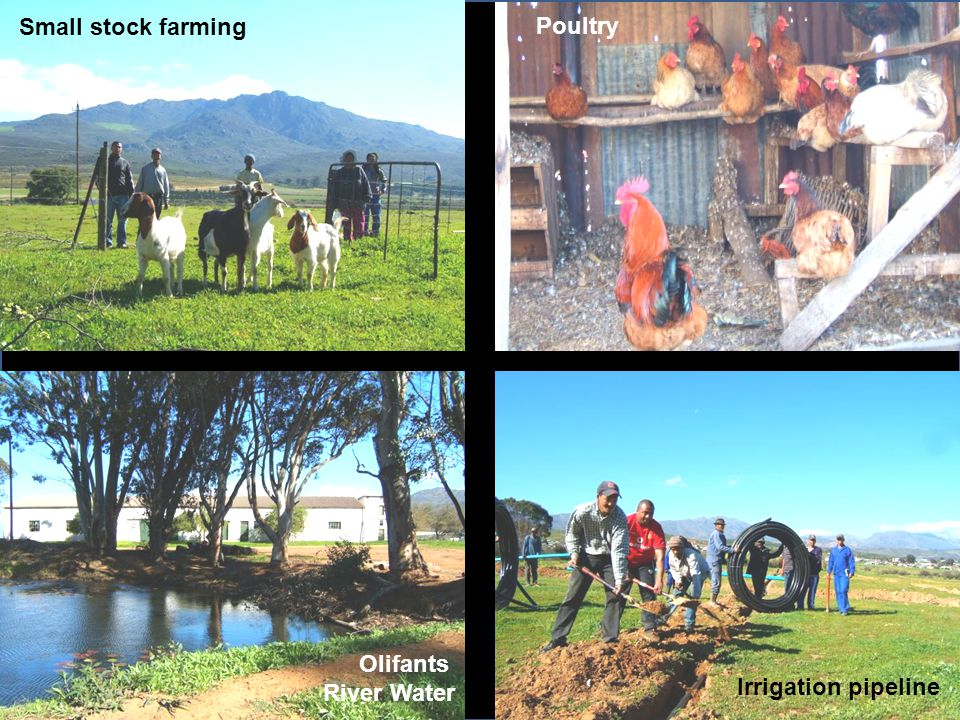 Small stock farming Poultry Olifants River Water Irrigation pipeline