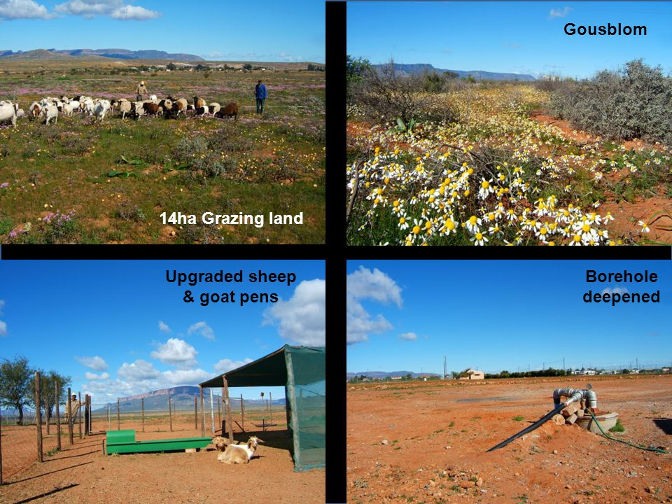 14ha Grazing land Gousblom Borehole deepened Upgraded sheep & goat pens