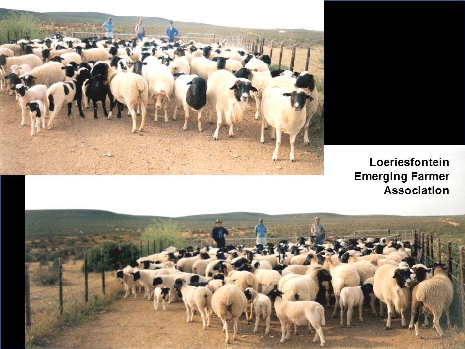 Loeriesfontein Emerging Farmer Association