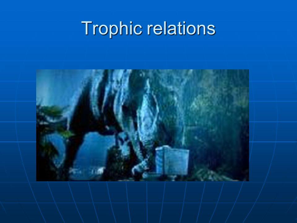 Trophic relations
