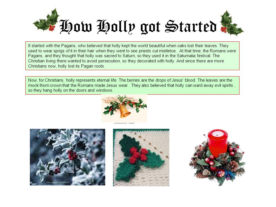 How Holly got Started It started with the Pagans, who believed that holly kept the world beautiful when oaks lost their leaves.