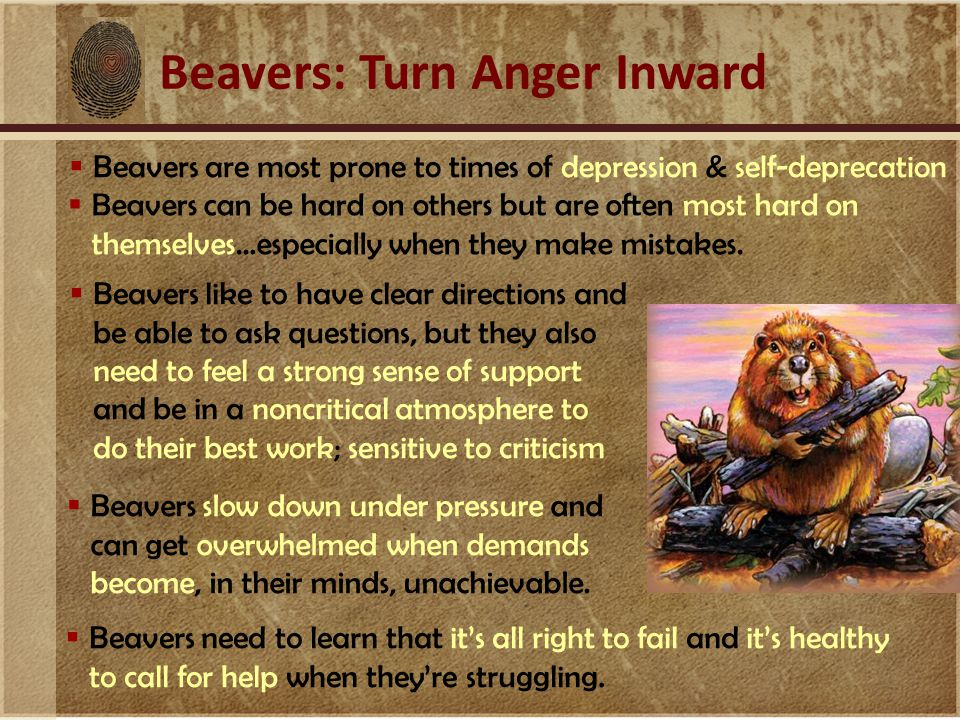 Beavers: Turn Anger Inward  Beavers are most prone to times of depression & self-deprecation  Beavers like to have clear directions and be able to a