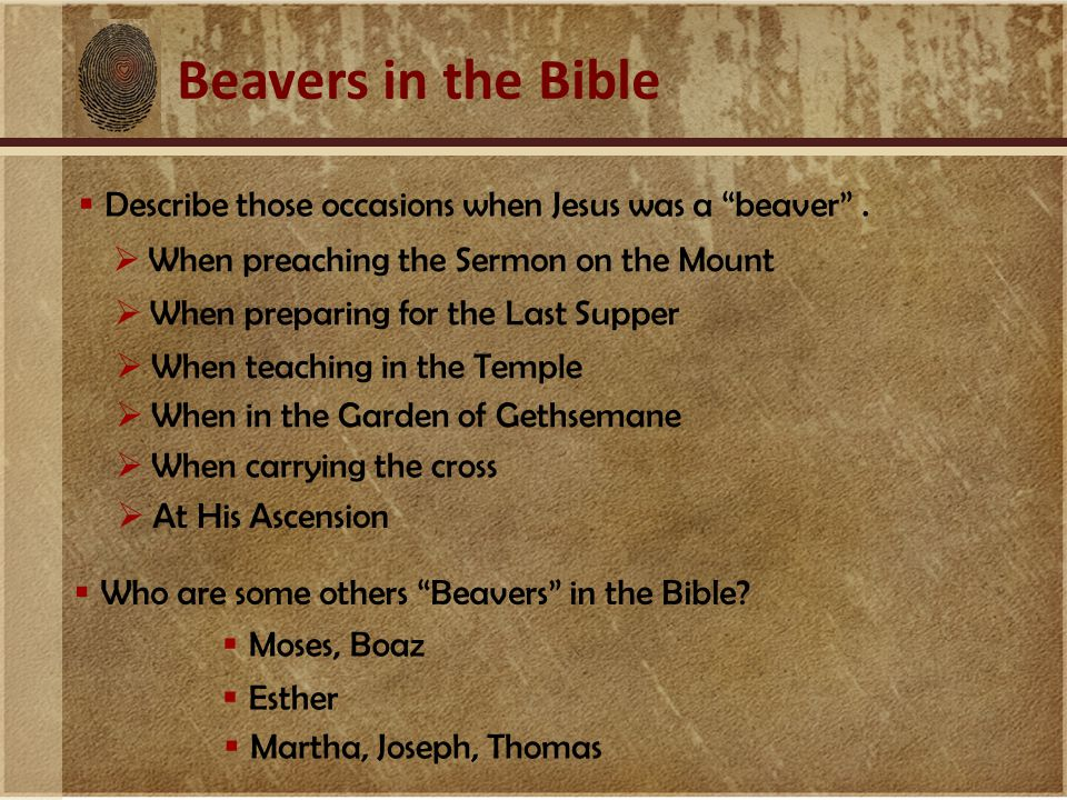 Beavers in the Bible  Describe those occasions when Jesus was a beaver .