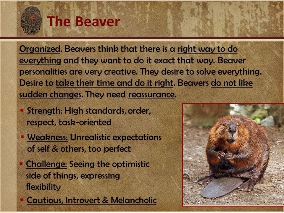 The Beaver Organized.