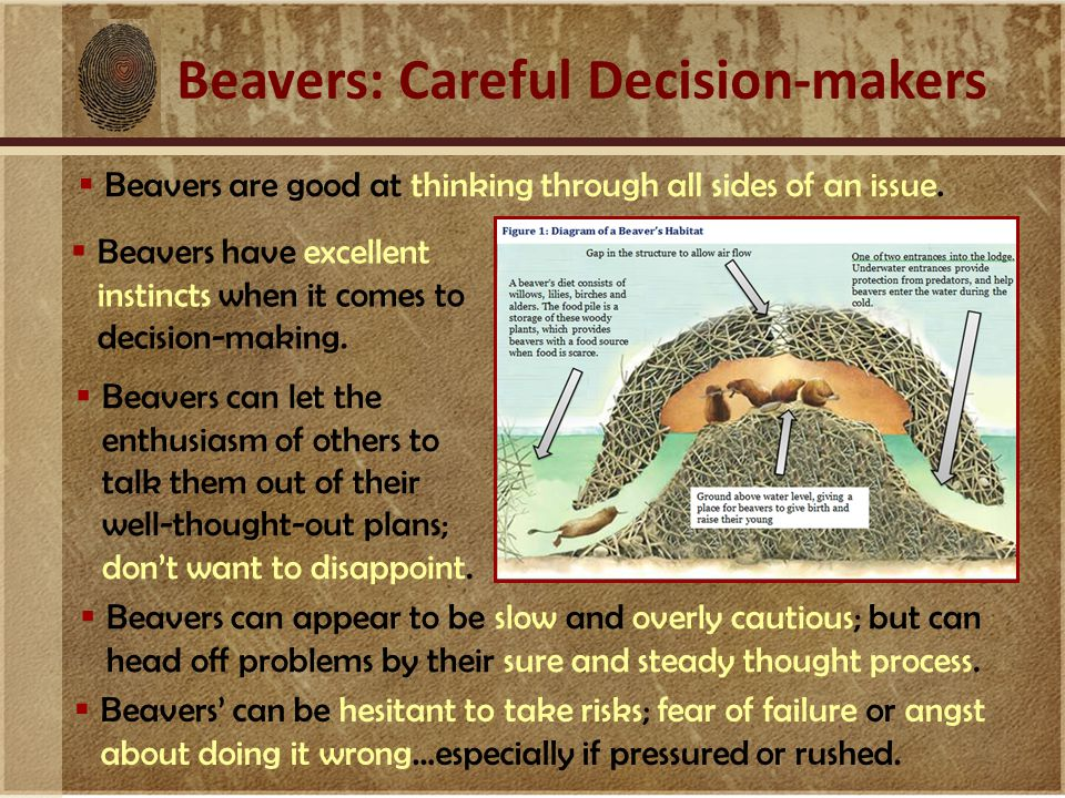 Beavers: Careful Decision-makers  Beavers are good at thinking through all sides of an issue.