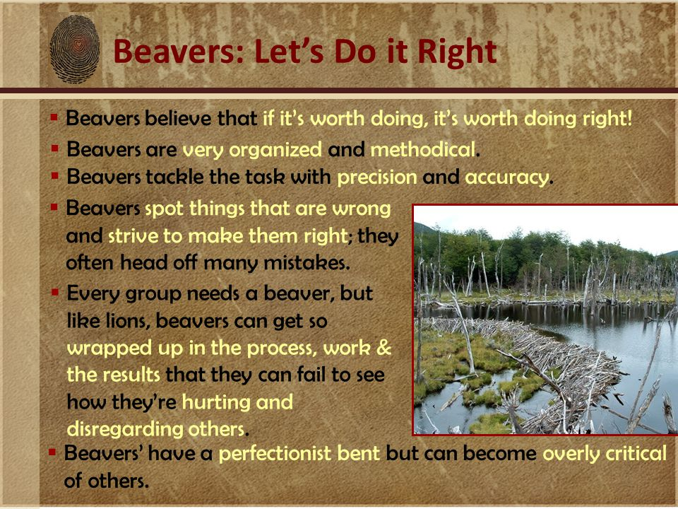 Beavers: Let's Do it Right  Beavers believe that if it's worth doing, it's worth doing right!  Beavers spot things that are wrong and strive to make